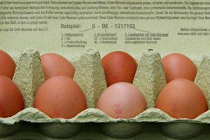 Skandalas dėl insekticido: naikinami milijonai olandiškų kiaušinių