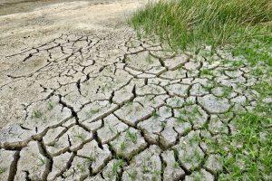 Penkiose savivaldybėse paskelbta stichinė sausra
