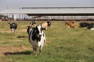 V. Baltraitienė: Lietuva tikisi didesnės ES paramos pienininkams