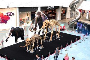 Kaune – nemokama ledynmečio milžinų skeletų paroda