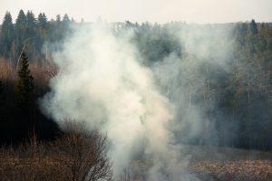 Tauragės rajone dega miškas