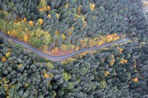 Generalinė miškų urėdija bus likviduota iki gegužės pabaigos