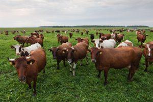 ŽŪM: ūkinių gyvūnų registravimo taisyklių būtina laikytis