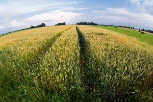Nesumokėjusiems žemės mokesčio – VMI priminimas
