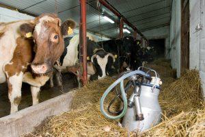 Lietuvos pieno perdirbėjai augino gamybą ir eksportą