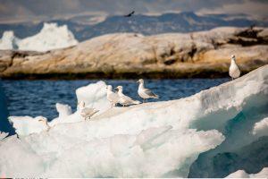 Tirpstant Grenlandijos ledynams gali pasklisti Šaltojo karo teršalai