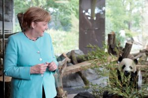 A. Merkel žada elgtis su Kinijos pandomis kaip tikromis žvaigždėmis
