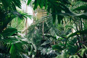 Amazonija – milžiniška augalų įvairove pasižymintys žemės plaučiai