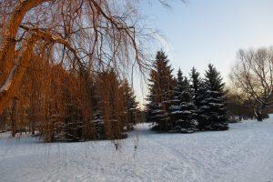 Barsukas iškrėtė staigmeną: dar ilgai tęsis žiema