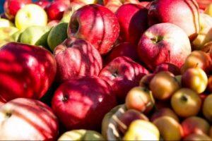 Pražudytas būsimas lietuviškų obuolių derlius