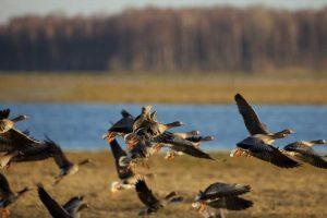 Sparnuočių pasitikti kviečia į paukščių rojų