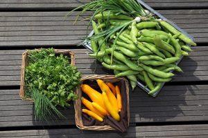 Viena Kanados parduotuvė prekiaus ant savo pastato stogo užaugintomis daržovėmis