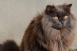 Retos veislės katė, vadinama kačių pasaulio supermodeliu