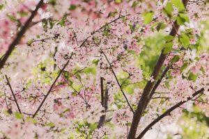 Sergamumas alerginėmis ligomis tik didės