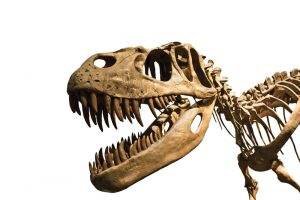 """Portugalijoje atrastas naujas dinozauras buvo tuometis """"grobuonių karalius"""""""