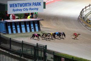 Australijoje atšauktas kurtų lenktynių draudimas