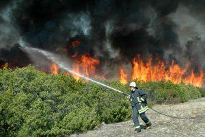Pajūrio miškuose pavojingai sausa