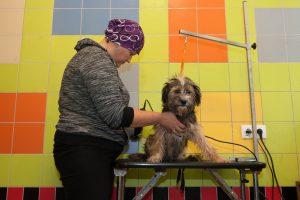Gyvūnų globėjai sveikina iniciatyvą