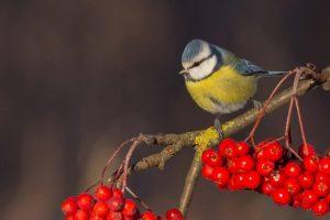 """""""Paukščiai prie mano namų"""": suskaičiuokime sparnuočius"""