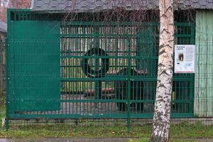 Skundai dėl kankinamų žvėrių: kiek uždirba verslininkų Bosų įkalinta meška?