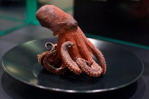 """""""Akropolyje"""" Jūrų muziejus kviečia aplankyti """"Jūros stalą"""""""