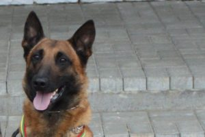 Šunį nušovęs A. Komskis parodymų ir vėl nedavė