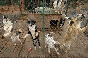 """""""Lidl"""" ištiesė pagalbos ranką trims gyvūnų prieglaudoms"""