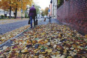 Paskutinė spalio savaitė – lietinga ir vėjuota