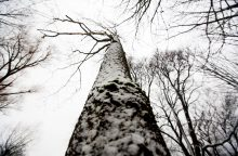 Nukritęs medis sužalojo neblaivų darbininką