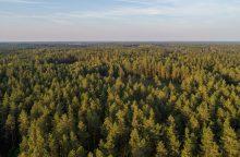 Už mieste turėtą žemę bus atlyginama ir mišku