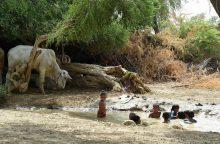 Mokslininkai: dėl karščio Azijoje 2100-aisiais nebebus įmanoma gyventi