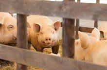 Seimas spręs, ar mažinti PVM žemės ūkio kooperatyvams