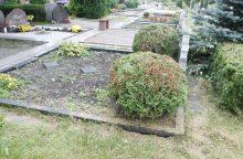 Ruošiamasi šienauti uostamiesčio kapinėse