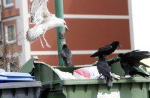 Palangoje šiukšlių konteineryje rastas negyvas naujagimis