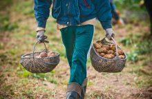 ŽŪM: daugiau smulkiųjų ūkininkų gaus paramą
