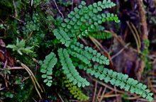 Neries regioniniame parke – itin retas augalas