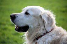 """""""Vabalganiai"""" šunys – tokius turi vos kelios Europos šalys, tarp jų – ir Lietuva"""