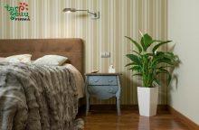 Miegamąjį harmonizuojantys augalai: kaip išsirinkti?