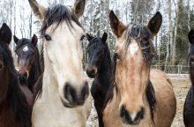 Iš ispano pavogti gyvuliai už beveik 36 tūkst. eurų