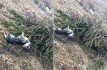 Žiaurumui nėra ribų: prie šakos pririšo šunelį ir paliko numirti