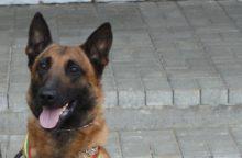 Nušautas pasieniečių šuo Ramzis bus kremuotas