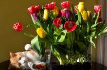 Gėlininkų gudrybės