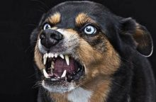 Septyniolikmetę apkandžiojo kaimynų šuo