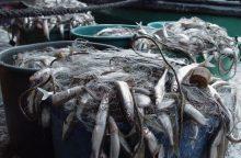 Stintų žvejyba pykdo verslininkus