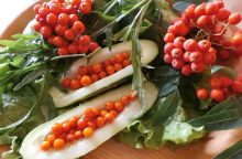 Šermukšniai – ir puošmena, ir maistas