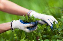 Atgyjančios gamtos dovanos sustiprins sveikatą