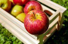Dietologė: lietuviškų ir atvežtinių obuolių kokybė skiriasi nedaug