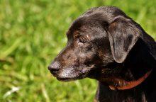 Sadizmas Lietuvoje šokiruoja: vieną šunį pakorė savo kieme, kitą – miške