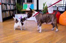 Laimės diena Vinco Kudirkos bibliotekoje: šunys, spektakliai ir improvizuotos kavinės