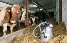 Pieno gamintojų sąskaitas papildys 25 mln. eurų parama